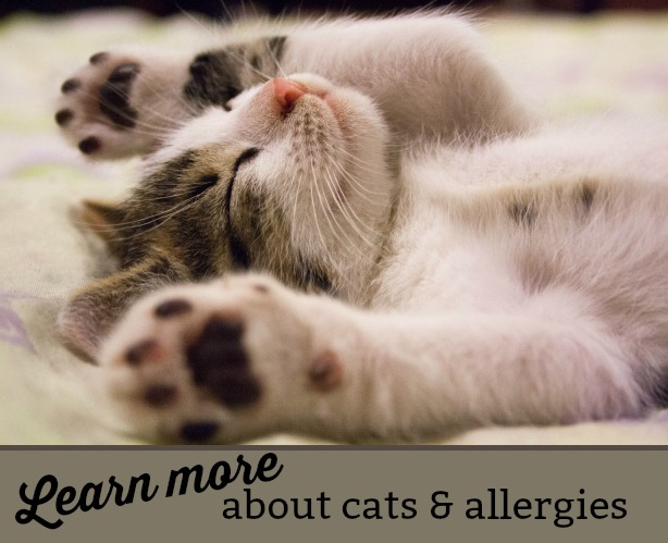 Learn more about cats and allergies